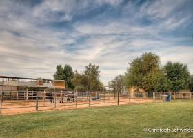 Queen Creek horse pasture - stalls