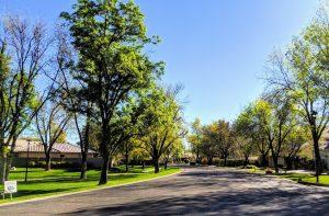 Graystone tree lined streets