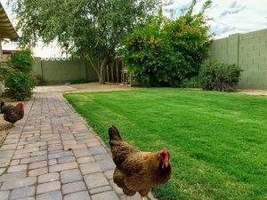 Scottsdale Estates Chicken Coop
