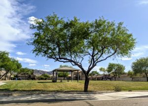 August Sun Country Estates park
